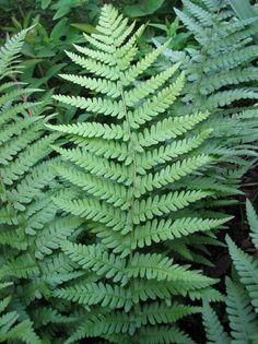 Ferns..