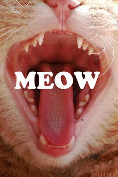 kitty cats, kitten, anim, meow, cat food, mouth, orange cats, clean teeth, baby cats