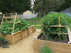 The Garden - Raised Beds