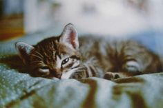 sleeps.