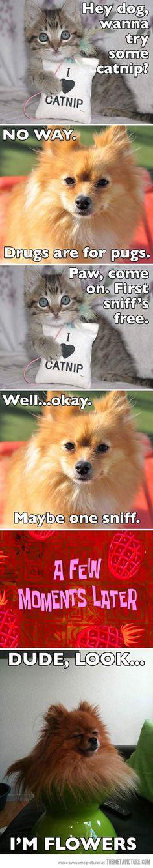 dogs on catnip