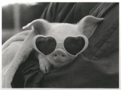 pig pig pig OMG CAN I PLEASE HAVE ONE!!!!!