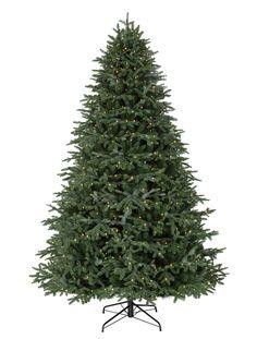 BH Fraser Fir Artificial Christmas Trees, Fraser Fir LED Pre Lit Christmas Trees | Balsam Hill AU