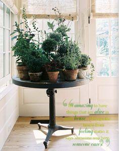 herb table: garden of herbs
