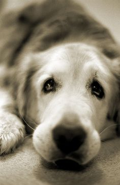 #all dogs really do go to heaven  Like,Repin,Share, Thanks!