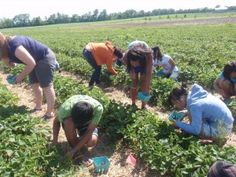 Pick Your Own Berries Soon! Indianapolis area u-pick berry farms
