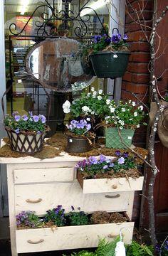 .garden shop