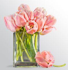Peach tulips