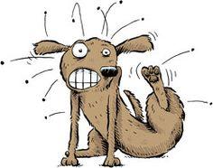 Does Your Pet Have Flea Allergy Dermatitis?  Does your pet scratch and scratch and scratch?