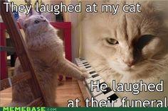 cat, bahaha