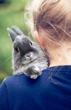 rabbit, funny bunnies, pet, baby bunnies, creatur