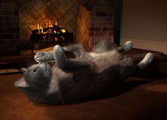 Cat furred and happy! cat fur
