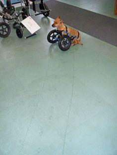 Webster showing off his wheelie tracks
