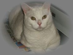"""Gerri Trager says that cat George is """"ready for anything. Just like Anderson."""""""