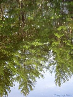 Trees reflected in Hidden Lake on the White Trail at Camp #Yawgoog, Rockville, Hopkinton, Rhode Island (RI).  A 2014 image by David R. Brierley.