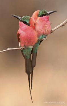 aves hermosas del mundo
