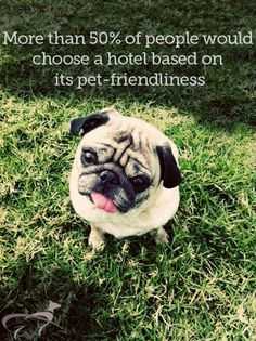 More than 50% of pet owners would choose a hotel based on pet friendliness, @PetRelocation - Take your friend wherever life takes you. survey finds - We are a #PetFriendlyHotel #FlemingsMayfair #Pets