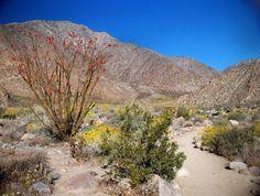 Hiking in the Anza Borrego Desert - so beautiful! (San Diego,California)