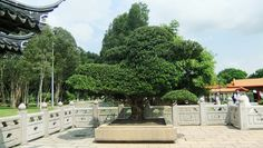 Large Bonsai Plant at Entrance of Bonsai Garden, Chinese Garden, Singapore by Equina.Firesong, via Flickr