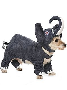 Forget Dumbo! Put your pooch in this costume, and he or she will become the cutest elephant you've ever seen.