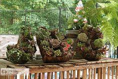 plant, succul wreath, succul garden, tutorials, succulent wreath diy
