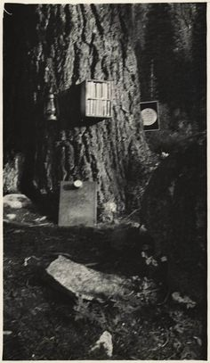 "California State Library has a photo collection of incredible branch libraries in California. This one is literally a 'branch' library!  The ""TNT Powder Box"" Branch, Siskiyou County.  Total volumes 20. Cardholders 15.  The branch in a box was nailed to the tree."