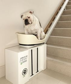 Dog tired: Chunky the bulldog hitches a ride up the stairs on the World's first stair lift for overweight pooches! Too funny!