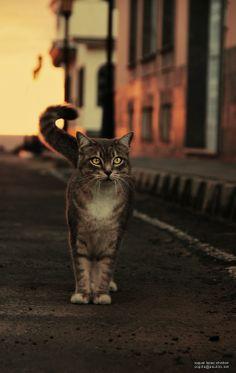 "500px / Photo ""Street cat"" by raquel lopez-chicheri"