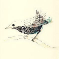 bird illustration :)