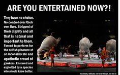 The circus sucks.  Stop supporting this shit!  You SHOULD know better.