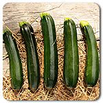 Organic Midnight Lightning Zucchini