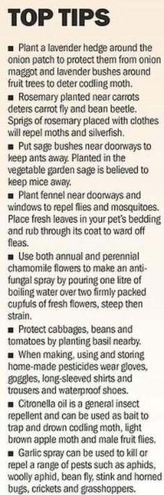 Helpful companion planting #tips for the #veggiegarden. Garlic spray can defeat aphids, tell Julie! So planting fennel near my back door. natur garden, pest control, plants, garden tips, gardens, gardening, planting herbs, natural garden, companion planting