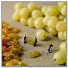 How grapes are made. Image from slinkachu.com
