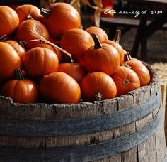 Old barrel, filled with small pumpkins-love!