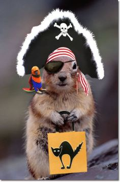Halloween squirrel!
