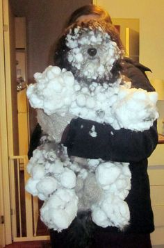 snowball dog :) they always have so much fun, for about 5minutes, then they look like this  :)