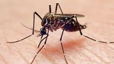 9 Things You Didn't Know About Mosquito Bites-ABC News