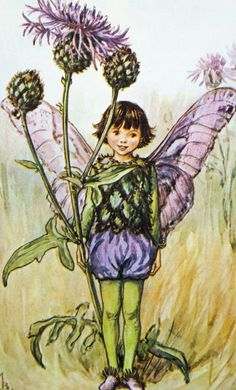 Greater Knapweed Fairy Picture by Cicely Mary Barker £4.50