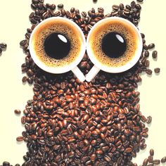 Haha this so funny :)  coffee and owl.. love