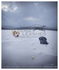 Loose Leashes - Beautiful Dog Photography
