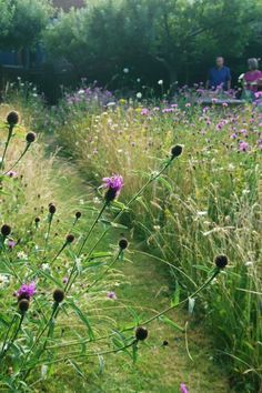 A mini meadow garden changes colour throughout the summer