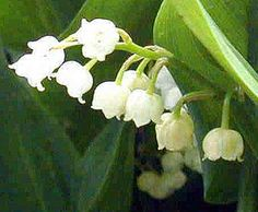 Sugarcraft - Tutorial to pipe Lily of the Valley in buttercream/royal icing