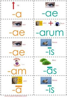 Week 15 printable resources for tutors or parents (Latin, Science Math)