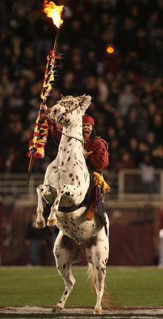 Chief Osceola on Renegade! GOOO NOLES <3
