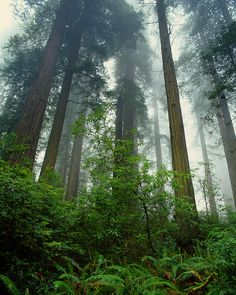Oakland Redwood Regional park // photo, Michael McAreavy