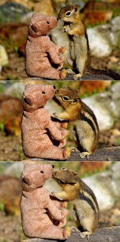 kisses - I love chipmunks!!