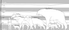 were-animal height chart by Zoanders on deviantART