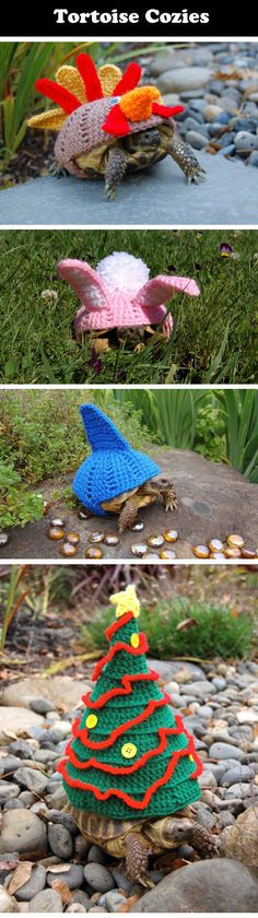 Magnificent tortoise cozies…I don't know which one I love more.