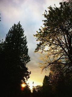 Morning In Oregon