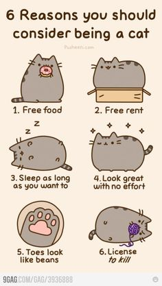 Why you wanna be a cat. All very valid points.